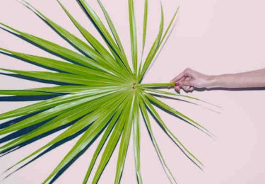 Hand Holding Palm Leaf.