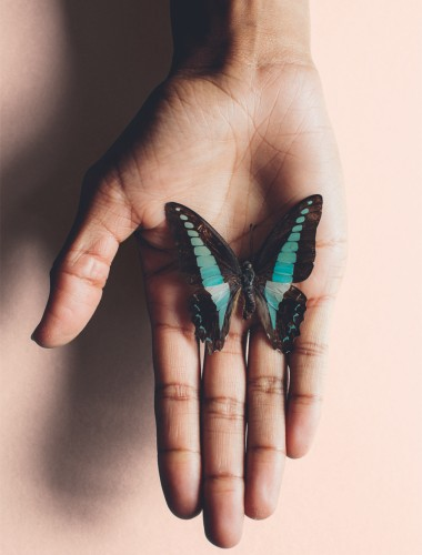 A Turquoise Butterfly Resting On A Hand Against A Turquoise Background